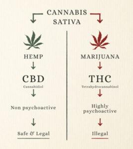 CBD vs THC a zákon